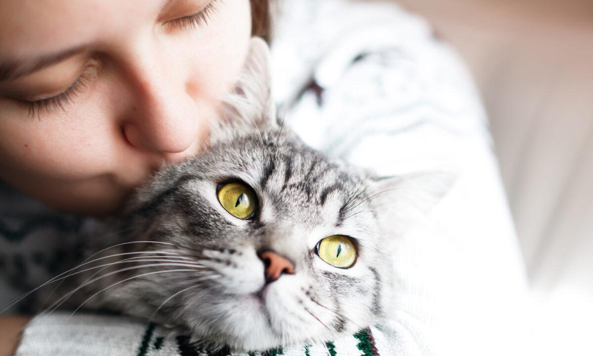 Katzen gratis basel baby Katze zum